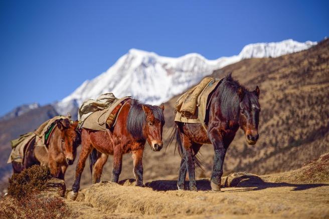 bhutan-2502780_1280